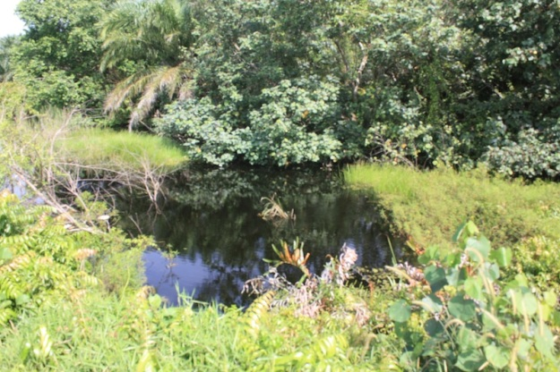 Brackish water swamp right next to the beach!