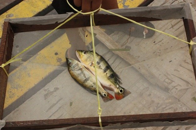 A couple of PBs from Taman Aman. Bait ikan seluang