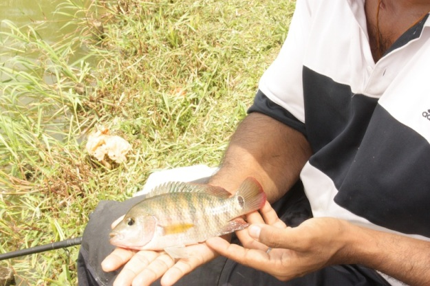 crossbred fish.