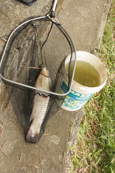 One pak cik caught this whopper